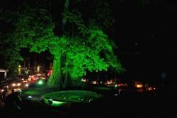 Freetown-Global-Greening.jpg